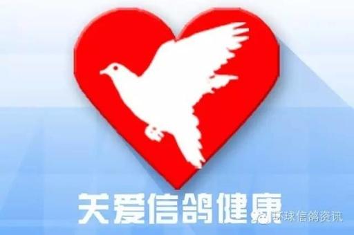 关爱信鸽健康(32)赛鸽拉稀、呕吐、甩食健康危害概念